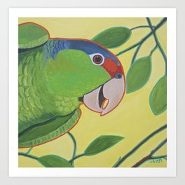 Happy Red Crowned Parrot Art Print