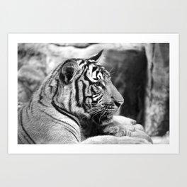 Tiger#2 Art Print