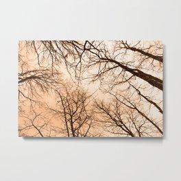 Naked trees tops, orange sky Metal Print