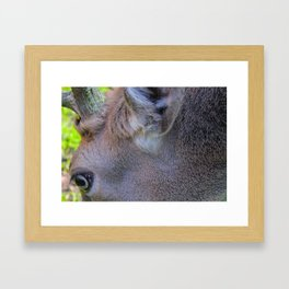 Stag Eye Framed Art Print