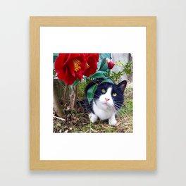 Orazio, the cat of camellias Framed Art Print