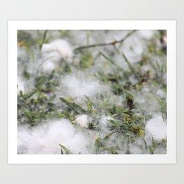 Cotton or snow Art Print
