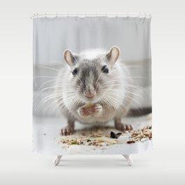Gerbil eating Shower Curtain
