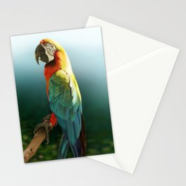 Macaw Stationery Cards