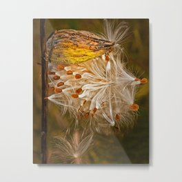 Milkweed Pod and Seeds in Autumn Metal Print