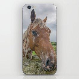 Horse at wall iPhone Skin