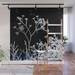 Frosted plant at cold winter day on black background Wall Mural