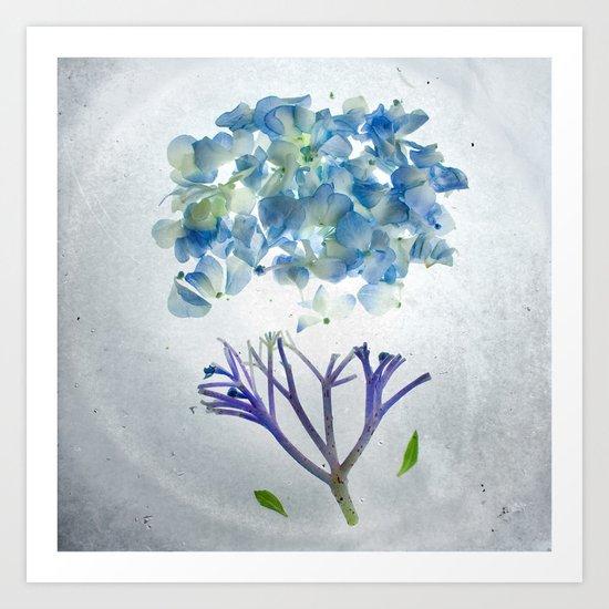 Botanical Blueprints - Hydrangea Art Print