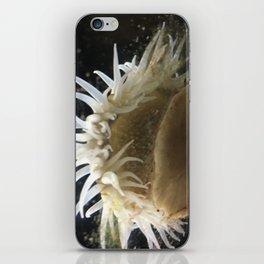 sea me iPhone Skin