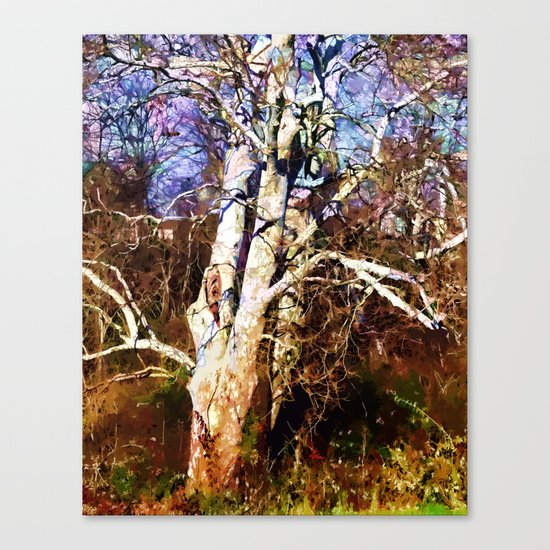 Old Sycamore tree Canvas Print