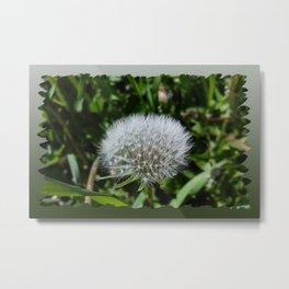 Dandelion in the grass Metal Print