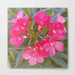 Pink flowers in spring Metal Print