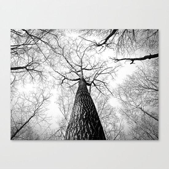 Under a falling sky Canvas Print