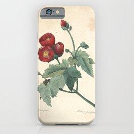 malva purpurea Redoute Roses 4 iPhone Case