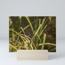 Dragonfly in the marsh Mini Art Print