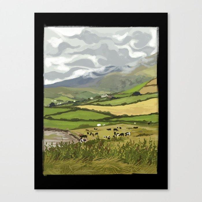 Cows in Dingle, Ireland Canvas Print