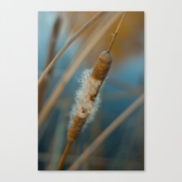 Open Cattail Canvas Print