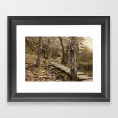 Mysterious path in the woods Framed Art Print