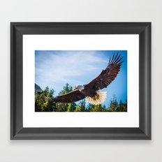 King of the Skies Framed Art Print
