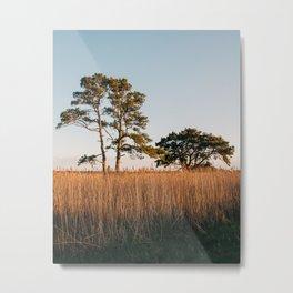 Chincoteague Marsh 01 Metal Print