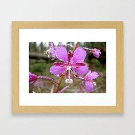 Drenched Pink Flower Framed Art Print
