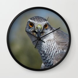 Northern Goshawk Close Wall Clock