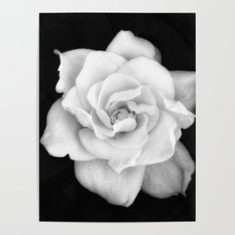 Gardenia Black and White Poster