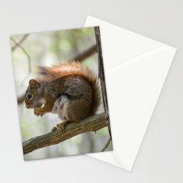 Surprise Squirrel Stationery Cards