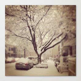 The winter tree in Brooklyn... Canvas Print