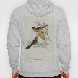 Helmeted Honey-eater (Ptilotis cassidix) illustrated by Elizabeth Gould (1804-1841) for John Goulds Hoody