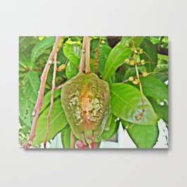 Fruit hanging high from the audience Metal Print