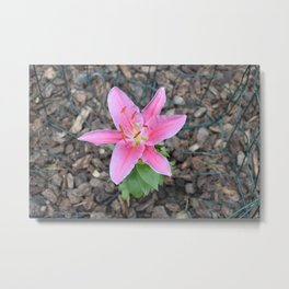 Gorgeous Lily Metal Print