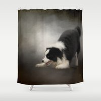 border collie Shower Curtains featuring Ready to Play - Border Collie by Jai Johnson