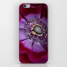 Anemone Coronaria - Macro iPhone & iPod Skin