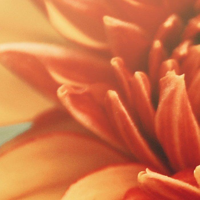 Orange Dahlia #2 * Garden Flowers Floral Blossom Nature Leggings
