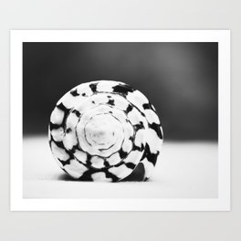 Black and White Seashell Photography, Shell Photo, Neutral Beach Art, Black White Coastal Photo Art Print