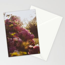 Wild Flowers - A Summer Evening Stationery Cards