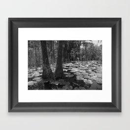Pads, Okefenokee National Wildlife Refuge Framed Art Print
