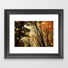 Autumn Boughs Framed Art Print
