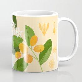 Botanical Diagram: Kumquat Coffee Mug