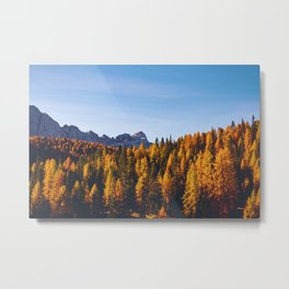 The Pine Tree Forest (Color) Metal Print