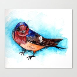 Barn Swallow Watercolor Canvas Print