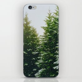 Winter Pine Tree Forest (Color) iPhone Skin
