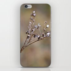 Germinating iPhone & iPod Skin