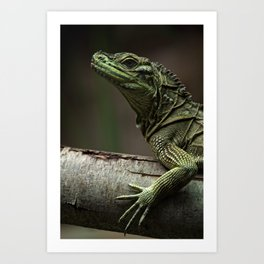 Sailfin lizard Art Print