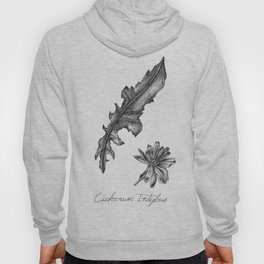 Chicory Botanical Illustration Hoody