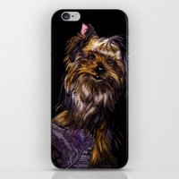 yorkie iPhone & iPod Skins featuring Yorkie Terrier by Eliza Leahy