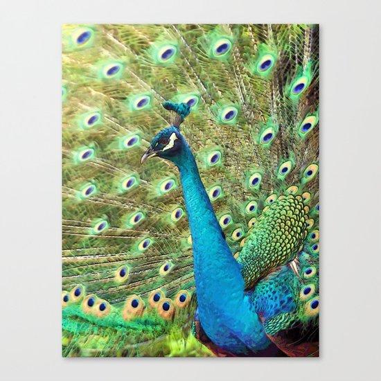 The Peacock. © J&S Montague. Canvas Print