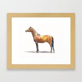 Young Arabian Framed Art Print