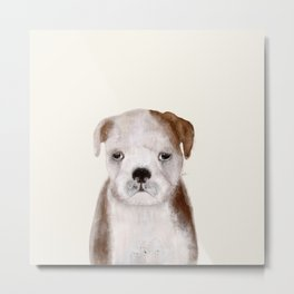 little bulldog Metal Print